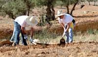 Les équipes de Toshiba TFIS ont participé à la plantation d'arbres pendant leur séjour.
