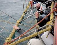 Protégés par une cage, les commerciaux de Sagemcom ont plongé avec les requins.