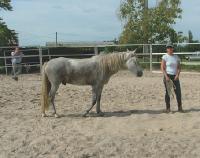 La formation de Horses and Coaching permet de travailler sur les rapports entre individus grâce au cheval