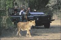 Le safari-photo reste une activité incontournable.