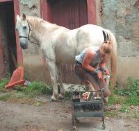 Ariane Meilhan ferre les chevaux toutes les six à huit semaines.