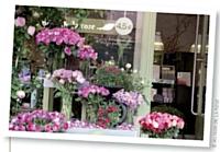 Les établissements Au nom de la rose commercialisent une seule variété de fleurs, la rose.