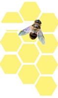 Ils font leur beurre grâce aux abeilles