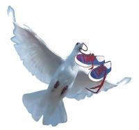 En Belgique, les colis sont envoyés par pigeon voyageur