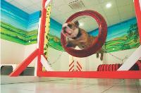 En 2005, lorsque Sophie Kauffmann a ouvert sa première crèche pour chiens, ce concept né aux Etats-Unis était encore inconnu en France.