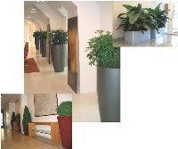 Dans les entreprises, la tendance est aux grands bacs contenant des plantes basses à petit feuillage.
