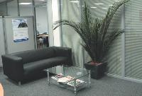 Les palmes de phénix peuvent être stabilisées. Cette plante artificielle, qui a tous les attributs d'une vraie, est idéale pour les espaces privés de lumière.