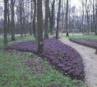 Le groupe PSA a choisi Les Jardins de Gally pour L'entretien de ses espaces verts extérieurs.
