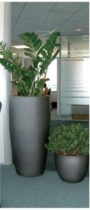 L'entretien des plantes est primordial lors de l'achat. Certaines espèces nécessitent peu d'arrosage comme les zamioculcas (à gauche) et les crassula ovata (à droite).