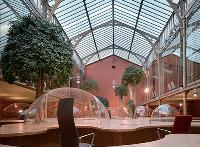 Au siège de la société Huot-Pons, des ficus panda de 4 mètres de haut sont placés entre les plans de travail.