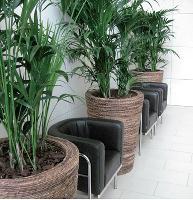Syngenta a installé au rez-de-chaussée de son immeuble des bacs de couleur marron comportant des palmiers kentia.