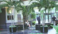 Le choix des bacs importe pour mettre en valeur les plantes. Cette entreprise de restauration a opté pour des bacs noirs pour ses palmiers Veitchia Merelli.