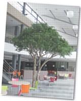 Ils ont beau ressembler à s'y méprendre à des vrais, ce sont bien de faux arbres au cémentent cet espace