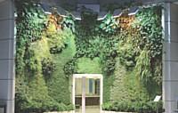 Véritables jardins verticaux, les murs végétaux sont à la fois des oeuvres d'art et des éléments d'écodesign prisés par les entreprises.