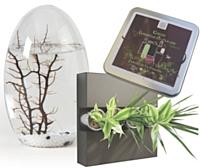 Des écosphères aux compositions florales, en passant par les coffrets, l'offre des cadeaux d'affaires écolos ne cesse de se développer.