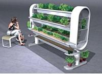 Un exemple de jardin d'intérieur, inventé par une jeune designeuse.