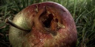Apple : de la suprématie à l'échec commercial ?