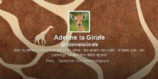 Adeline, la girafe qui tweete du Parc zoologique de Paris
