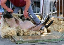 Patagonia interrompt ses relations avec un fournisseur accus� de cruaut� envers les animaux