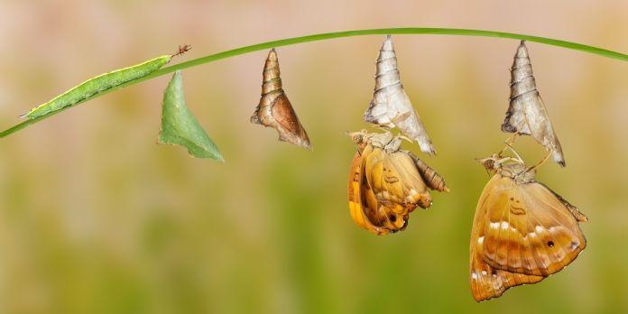 Le management de transition a la cote auprès des entreprises