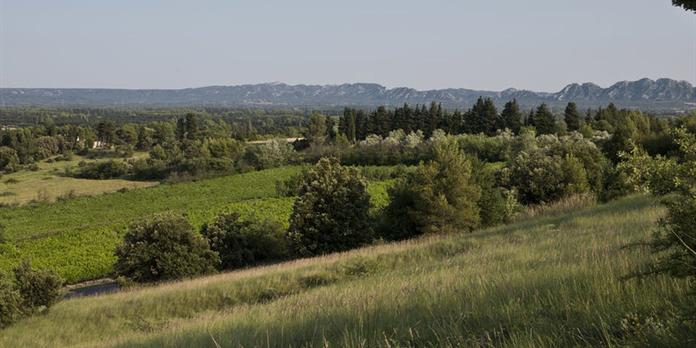 Agriculture et transition énergétique : les atouts du biogaz et de l'agroforesterie