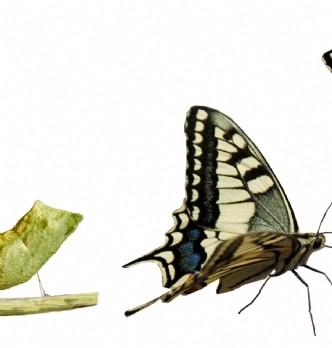 Les besoins en management de transition, révélateurs de l'évolution des métiers achats