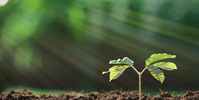 Face au réchauffement climatique, la reforestation n'est qu'une partie de la solution
