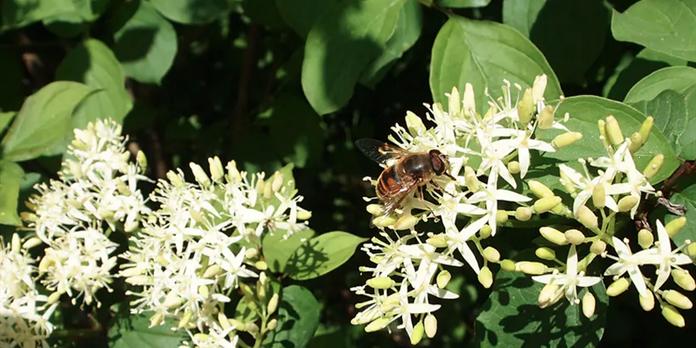 Comment faire de votre jardin un havre de biodiversité