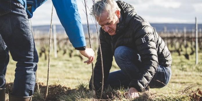 Frédéric Dufour, président de Ruinart, en train de planter un arbre dans le cadre du projet pilote de Vitiforesterie, le 15 mars 2021 à Taissy.