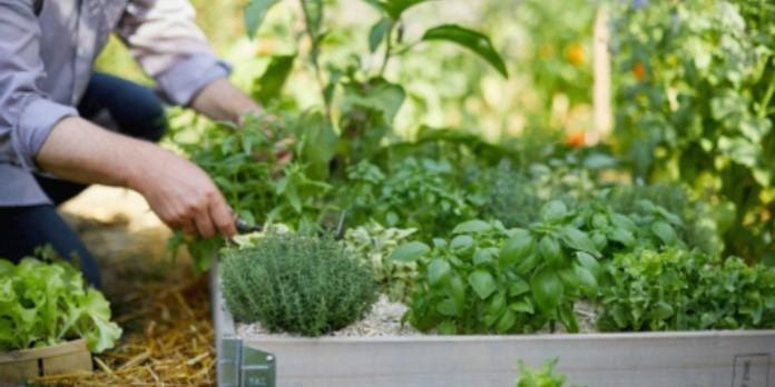 Botanic devient société à mission