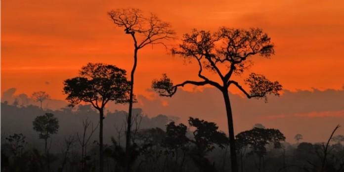 En août 2020, dans l'État de Para au Brésil, coucher de soleil sur fond de fumées provenant d'incendies illégaux. CARL DE SOUZA / AFP