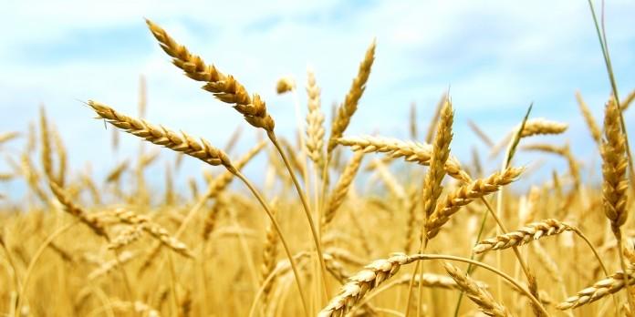 Nestlé Céréales soutient ses agriculteurs