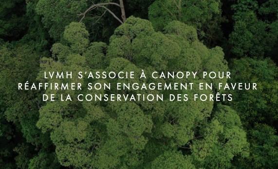 LVMH se mobilise pour la conservation des forêts