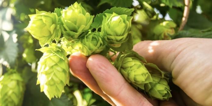 La bière Fischer renforce son engagement environnemental