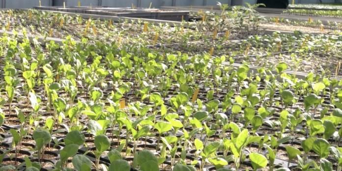 Nature Urbaine : la plus grande ferme urbaine d'Europe ouvre à Paris