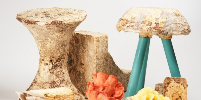 Mycotopia : utiliser le champignon comme recycleur naturel