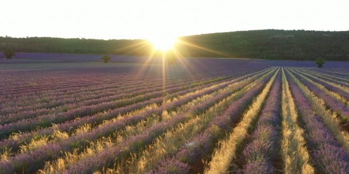 L'Occitane mise sur l'agroécologie