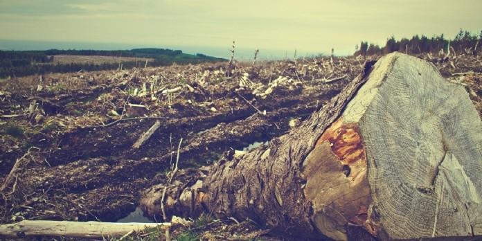 Déforestation et activités agricoles : liaisons dangereuses