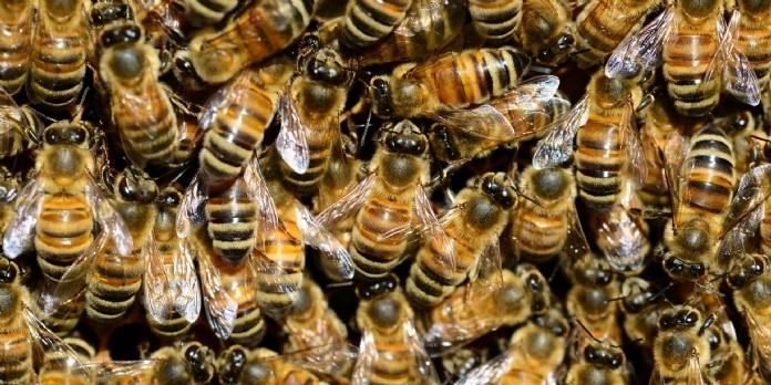 Le Parlement Européen organise une semaine pour les pollinisateurs
