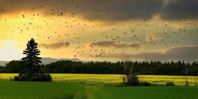 La fondation Nature & Découvertes s'engage en faveur de la biodiversité