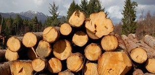 Fili�re bois : Les acteurs se mobilisent